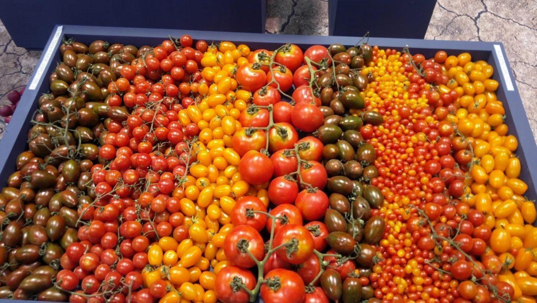 כנס  עגבניות מאכל עונת 2017-2018