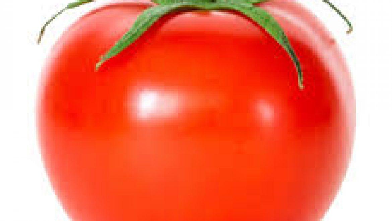סדרת כנסים בנושא עגבניות מבית זרעים גדרה-סינג'נטה