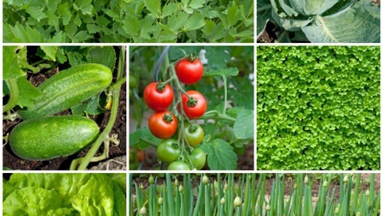 הזמנה לקורס שיטות מתקדמות לגידול ירקות בבתי צמיחה חורף 2018