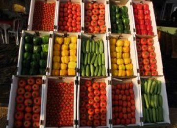 מפגש מגדלי ירקות – בשור 21.08.2017