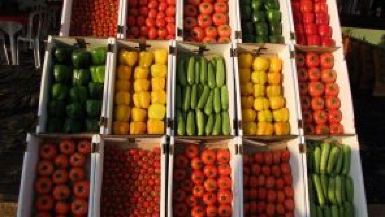 מפגש מגדלי ירקות 24.01.18